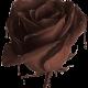 Шоколадная линия